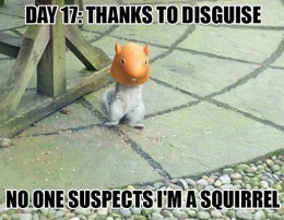 disguised squirrel
